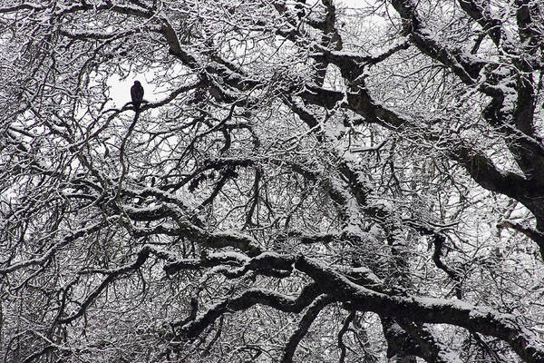 Photograph - Icy Sentinel by Wes and Dotty Weber