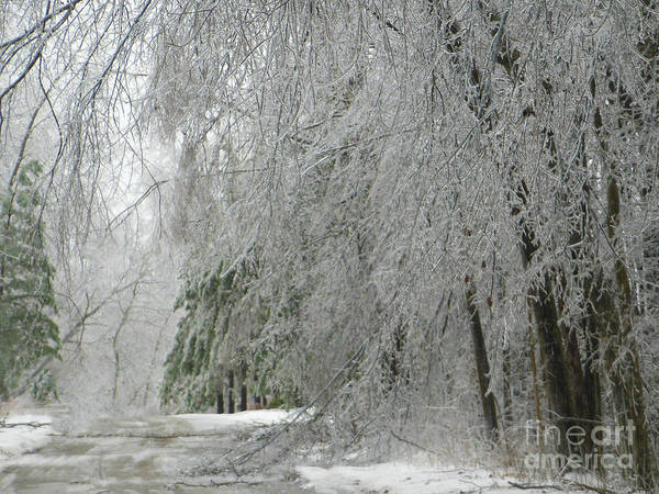 Photograph - Icy Street Trees by Rockin Docks Deluxephotos