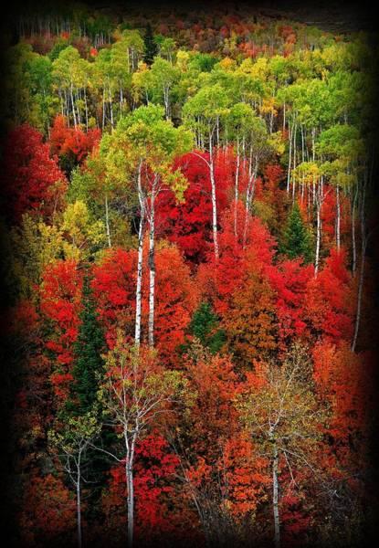 Photograph - Idaho Autumn T-shirt by Greg Norrell
