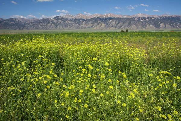Photograph - Idaho Field Of Wildflowers by Aaron Spong