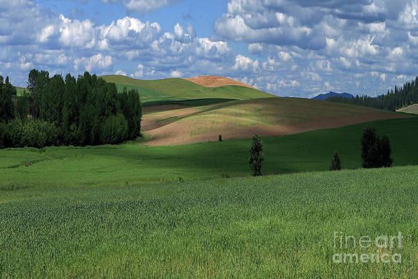 Wall Art - Photograph - Idaho Fields by Rick Mann