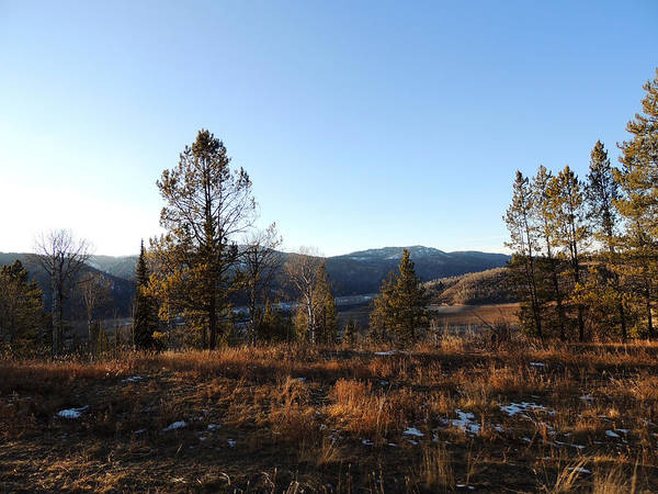 Photograph - Idaho Pines In Evening Light by Andrew Chambers