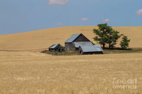 Wall Art - Photograph - Idaho Wheat Farm by Rick Mann