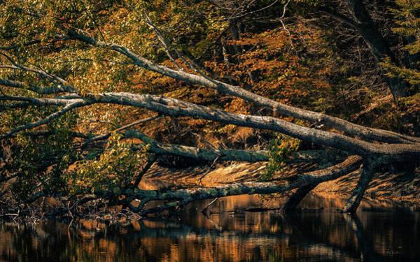Photograph - If A Tree Falls by Bob Orsillo
