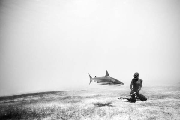 Breath Photograph - If Sharks Could Fly by One ocean One breath