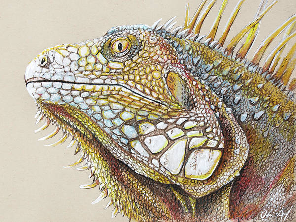 Drawing - Iguana Portrait by Aaron Spong