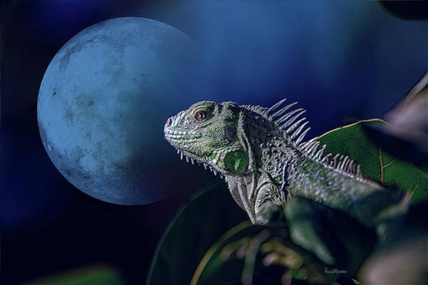 Photograph - Iguana Under A Blue Moon by Ericamaxine Price