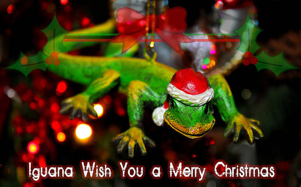 Photograph - Iguana Wish You A Merry Christmas by Susan Vineyard