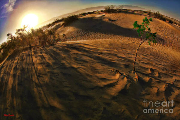 Photograph - IIttle Green Death Valley Tree by Blake Richards