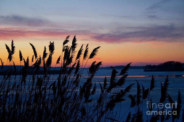 Photograph - Illinois River Winter Sunset by Paula Guttilla