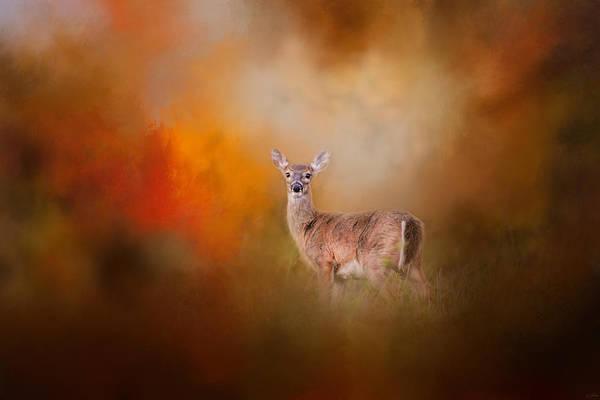 Photograph - Illuminated By The Autumn Light by Jai Johnson