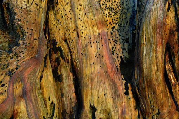 Photograph - Illuminated Stump by Bruce Gourley