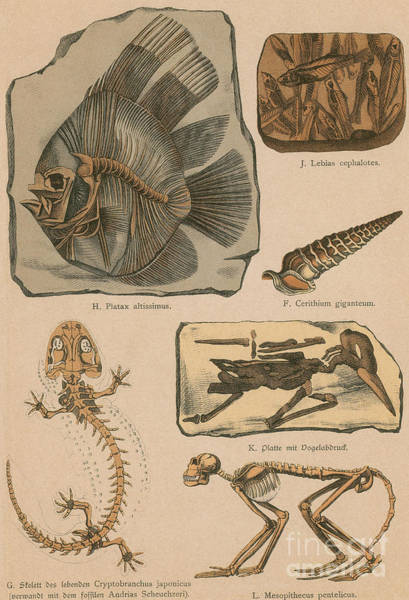 Photograph - Illustrated Geology And Paleontology by Science Source