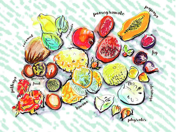 Drawing - Illustration Of Exotic Fruits by Ariadna De Raadt