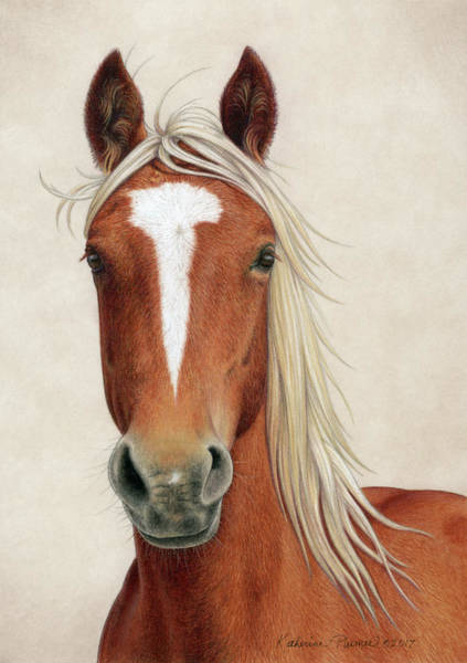 Equine Drawing - Illya by Katherine Plumer