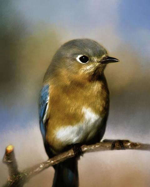 Wildbird Photograph - I'm A Bluebird by Lana Trussell