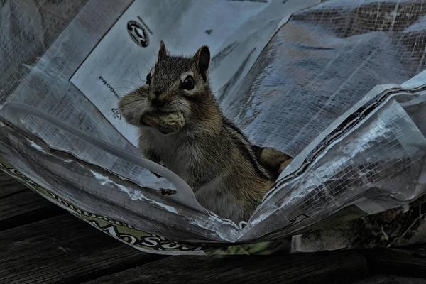 Photograph - I'm Hungry by Randy J Heath