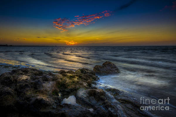 Palmetto Photograph - I'm Listening  by Marvin Spates