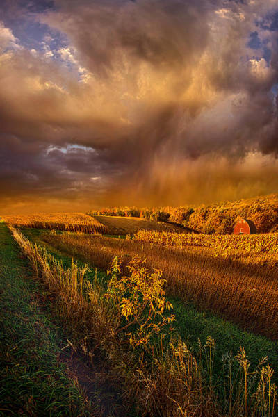 Photograph - I'm Living Today by Phil Koch