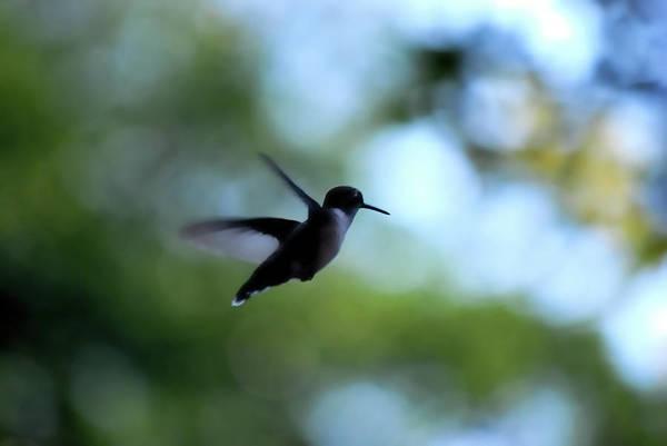 Photograph - I'm On My Way by Lori Tambakis