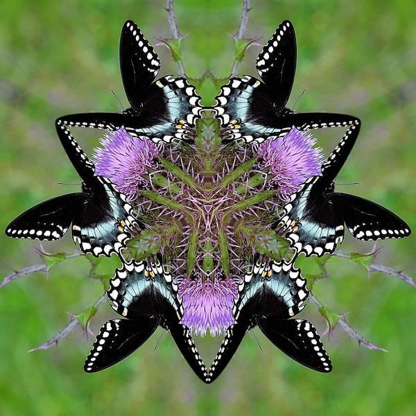 Katrina Digital Art - Im So Pretty by Katrina Johns