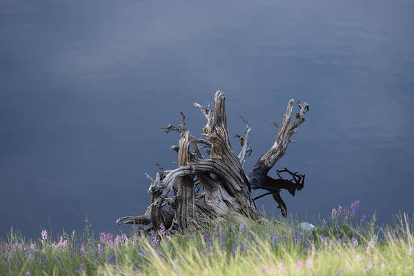 Photograph - Stump Chambers Lake Hwy 14 Co by Margarethe Binkley