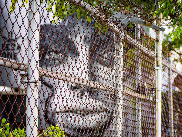 Photograph - Image Behind The Fence by Robin Zygelman