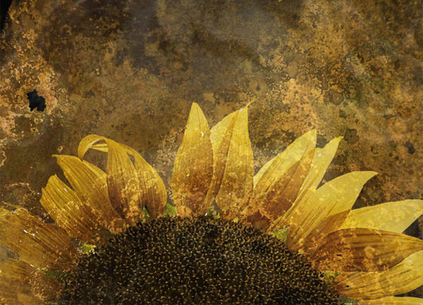 Photograph - Imitating The Sun by Char Szabo-Perricelli
