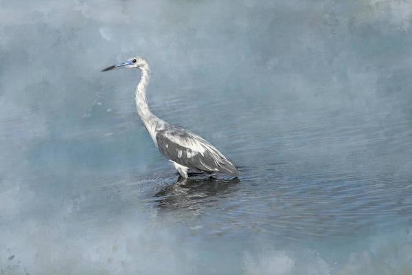 Little Blue Heron Photograph - Immature Little Blue Heron by Donna Kennedy