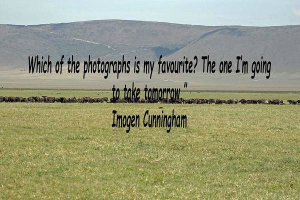 Photograph - Imogen Cunningham Quote by Tony Murtagh