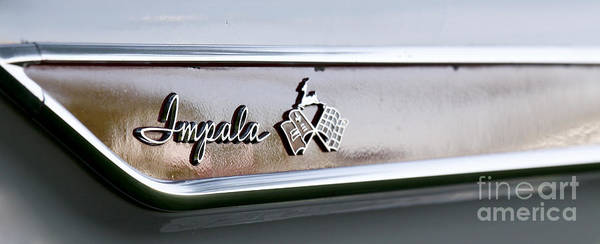 Photograph - Impala by Richard Lynch