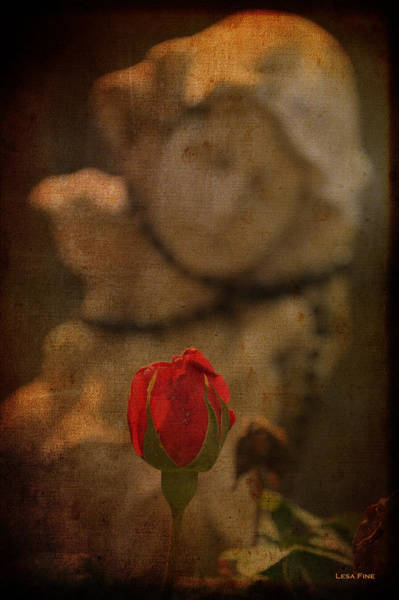 Photograph - Imperfect Lady by Lesa Fine