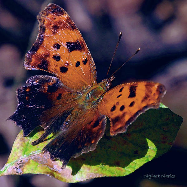 Orange Butterfly Digital Art - Imperfect Satyr Comma by DigiArt Diaries by Vicky B Fuller
