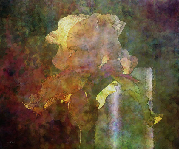 Photograph - Impression Iris 6731 Idp_22 by Steven Ward
