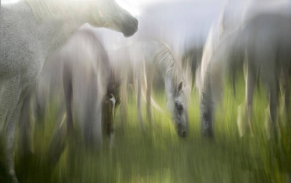 Fantasy Horse Wall Art - Photograph - Impression by Milan Malovrh