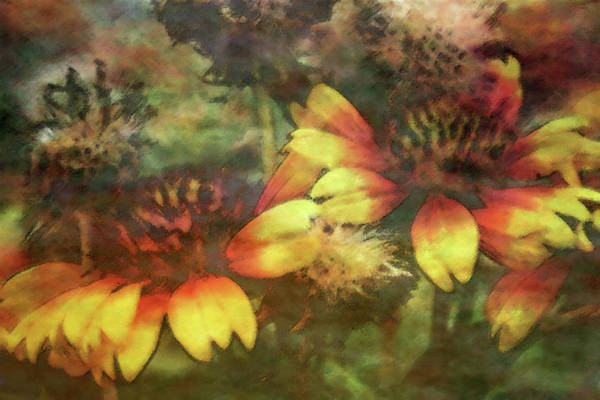 Photograph - Impressionist Blanket Flowers 2597 Idp_2 by Steven Ward