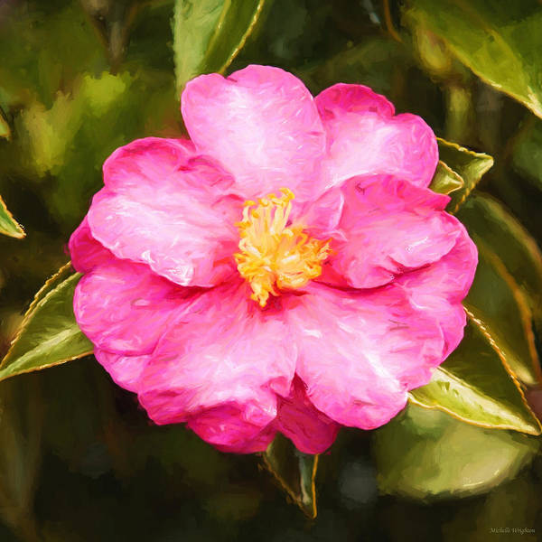 Camelia Photograph - Impressionist Floral Pink Camelia by Michelle Wrighton