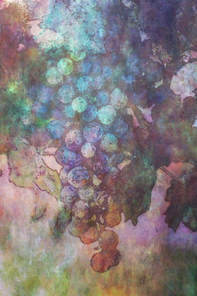 Photograph - Impressionist Grapes On The Vine 2747 Idp_2 by Steven Ward