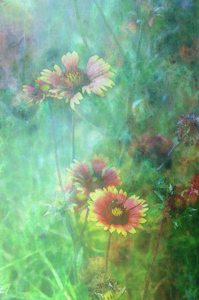 Photograph - Impressionist Indian Blanket 2082 Idp_2 by Steven Ward