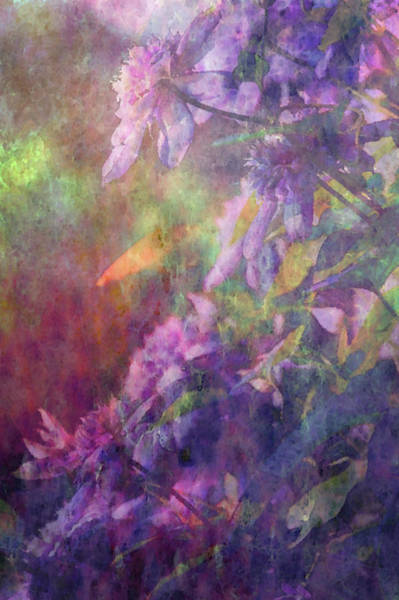 Photograph - Impressionist Lavender Clematis Blossoms And Vines 2741 Idp_2 by Steven Ward