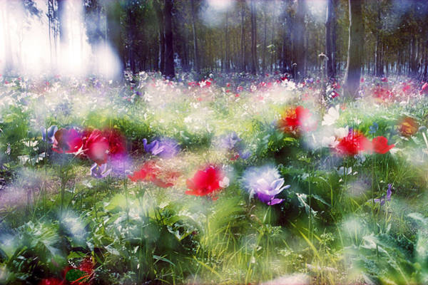 Photograph - Impressionistic Photography At Meggido 2 by Dubi Roman