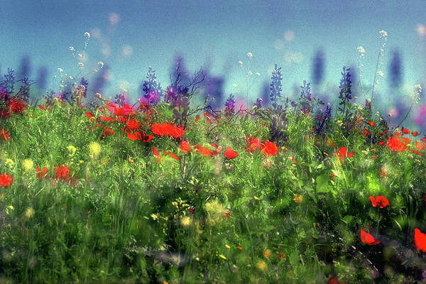 Art Print featuring the photograph Impressionistic Springtime by Dubi Roman