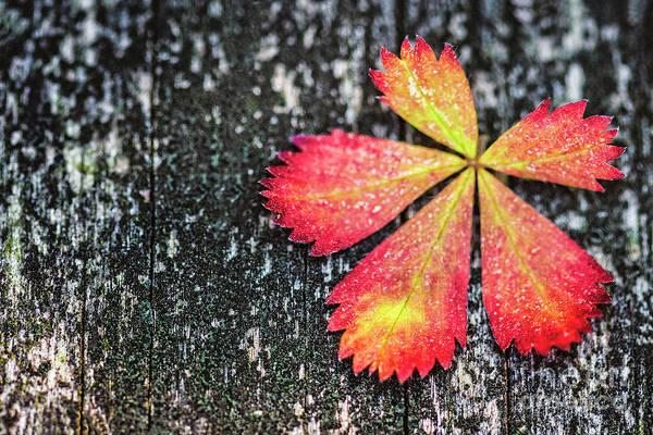 Autumnal Wall Art - Photograph - Impressions Of Autumn by Evelina Kremsdorf