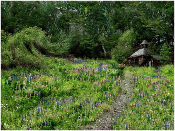 Photograph - Impressions Of Lupine by Wayne King