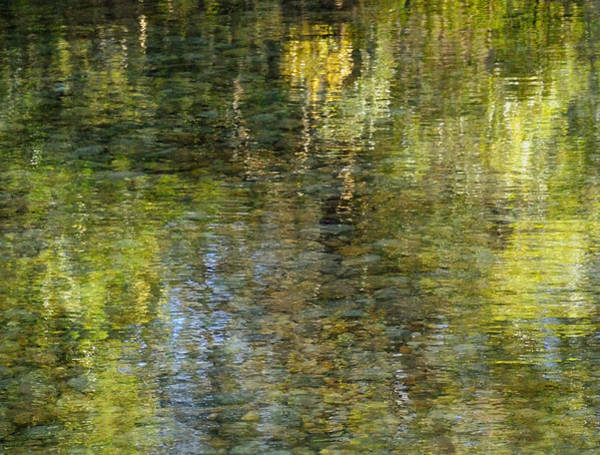 Claude Monet Photograph - Impressions Of Monet by Carol Eade