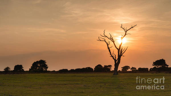 Wall Art - Photograph - In A Blaze Of Glory New Forest Sunset by Richard Thomas