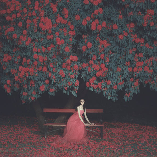 Red Flower Photograph - In A Garden by Anka Zhuravleva