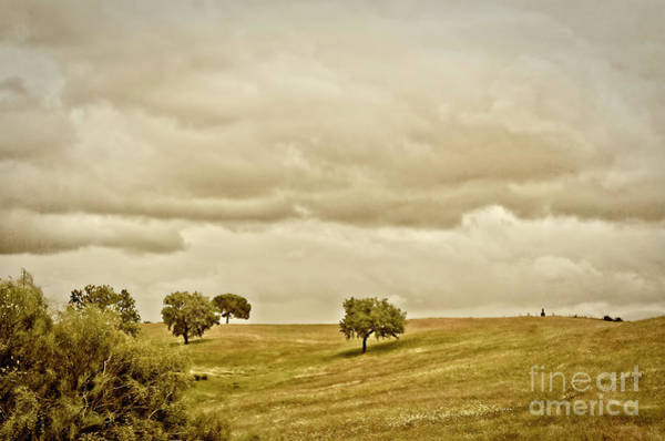 Wall Art - Photograph - In A Mood by Mary Machare