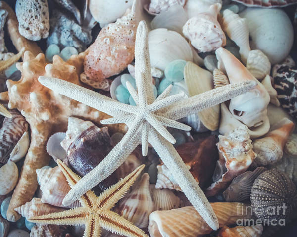 Wall Art - Photograph - In A Sea Of Shells-  by Colleen Kammerer