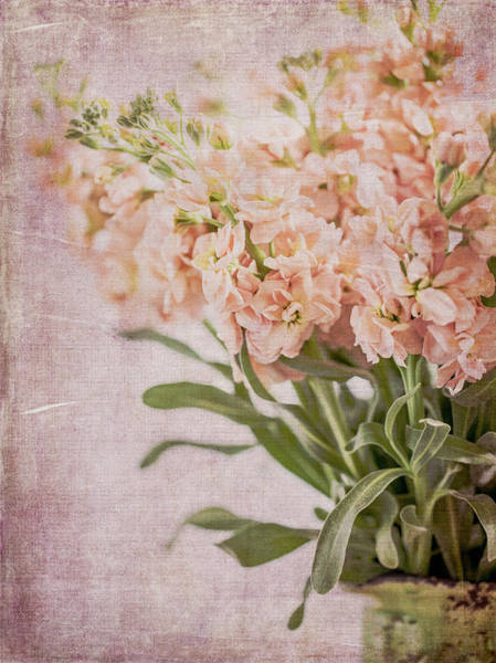 Stalk Photograph - In A Vase #2 by Rebecca Cozart